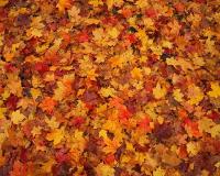 Signet's Fresh Ideas for Fall